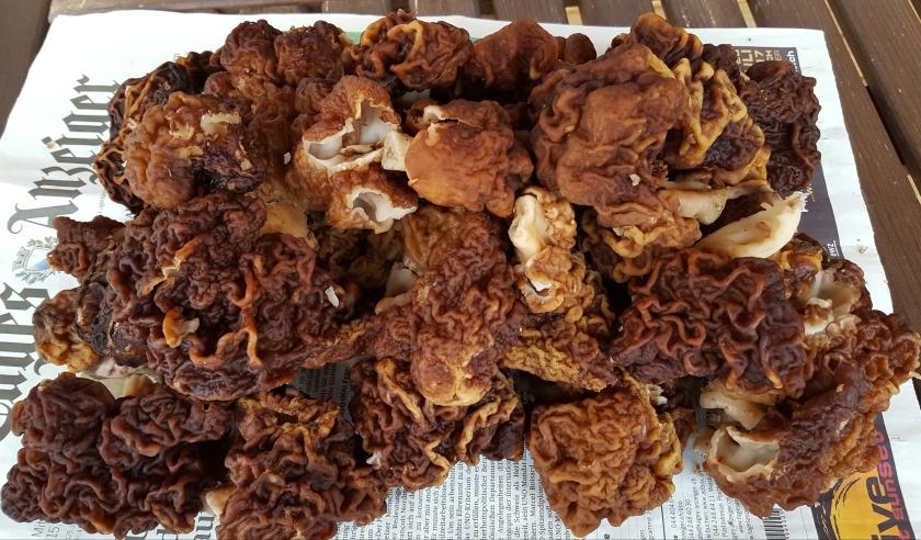 Sieniä2