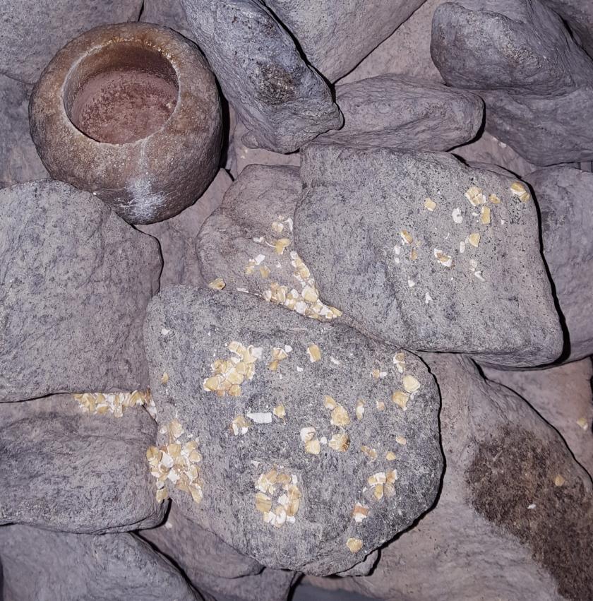 Kauraa saunan kivillä